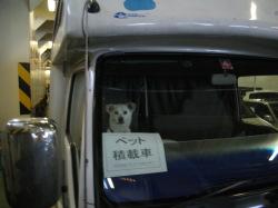 ワンコは車の中