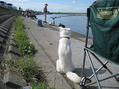 ハゼ釣りシーズンは大混雑