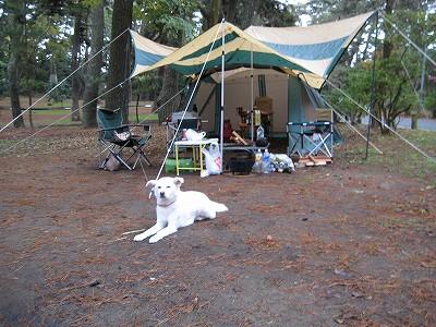 ゆうも久々キャンプ