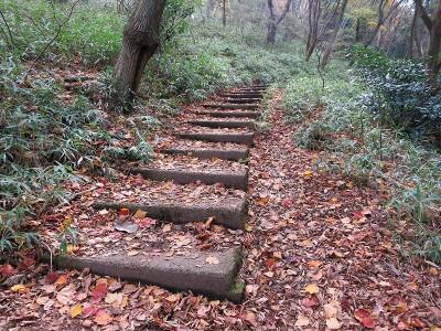 自然研究路の落葉