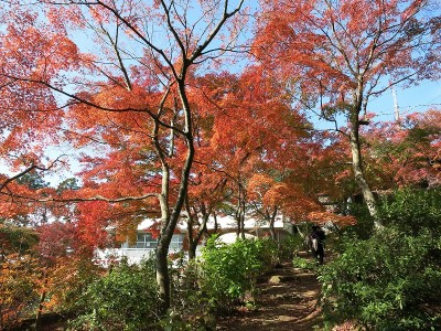 筑波山神社周辺の紅葉