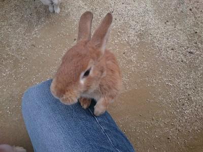 園内には小動物園。ウサギとふれ合い