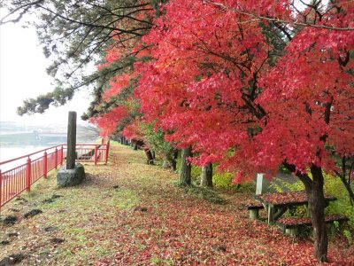 大前神社の紅葉