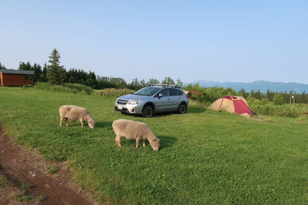 サイトに羊が来た!