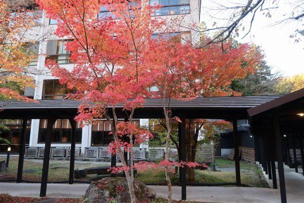 湯西川温泉 揚羽 敷地内の紅葉