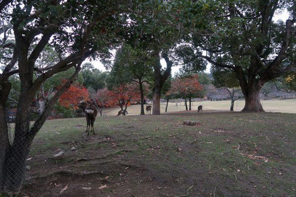 朝の奈良公園