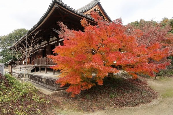 薬師寺の紅葉